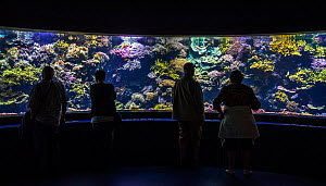 Visitors looking at tropical fishes in huge aquarium at Oceanopolis - ocean discovery park - at Brest, Normandy, France, September 2015  -  Philippe Clement