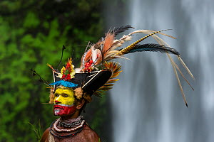 hief Timon Tumbu Huli Wigman in traditional / ceremonial dress with plumes of Birds of Paradise, parrots and lorikeets. Tari Valley, Papua New Guinea. - Nick Garbutt