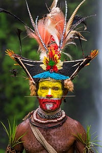 Chief Timon Tumbu Huli Wigman in traditional / ceremonial dress with plumes of Birds of Paradise, parrots and lorikeets. Tari Valley, Papua New Guinea. - Nick Garbutt