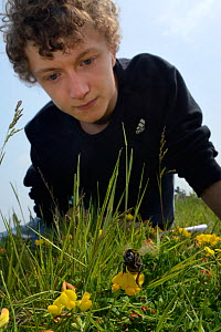 Alex Campbell watching a Short-haired bumblebee queen (Bombus subterraneus) collected in Sweden that she has just released during a UK reintroduction project run by the Bumblebee Conservation Trust /... - Nick Upton