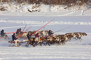 Komi men racing their reindeer at a reindeer herders' festival in Saranpaul. Khanty-Mansiysk, Western Siberia, Russia - Bryan and Cherry Alexander