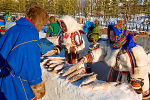 Nenets women selling fish during the reindeer herders' festival in Nadym. Yamal, Western Siberia, Russia - Bryan and Cherry Alexander