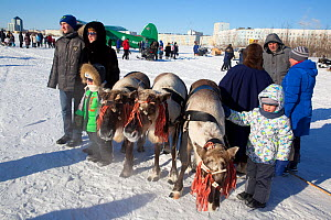 Tourists visiting Nenets reindeer festival, having photograph taken with reindeer.  Nadym. Yamal, Western Siberia, Russia - Bryan and Cherry Alexander