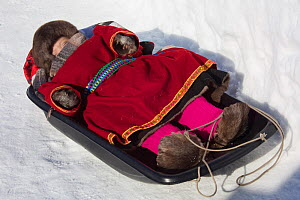 Young Nenets boy sleeping in plastic sled during the Reindeer herders' festival at Nadym. Yamal, Western Siberia, Russia - Bryan and Cherry Alexander