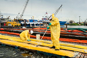 Men cleaning oil containment booms during Deepwater Horizon oil spill, Louisiana, Gulf of Mexico, USA, August 2010 - Mark Carwardine