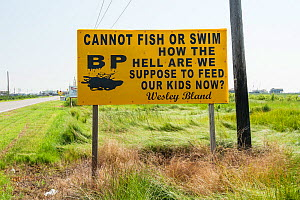 Protest sign by road during Deepwater Horizon oil spill, Louisiana, Gulf of Mexico, USA, August 2010 - Mark Carwardine