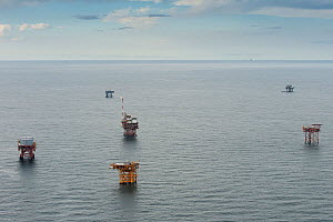 Aerial view of oil rig drilling platforms,  Louisiana, Gulf of Mexico, USA 2010 - Mark Carwardine
