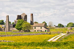 Magpie Mine near Monyash surrounded by fields of Meadow buttercups (Ranunculus acris) Peak District National Park, Derbyshire, England, UK, May. - Chris Mattison