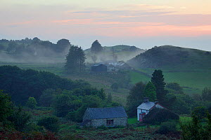 Dusk view of release area among wooded valleys and hill farmland where Pine martens (Martes martes) have been reintroduced to Wales by the Vincent Wildlife Trust, Cambrian mountains, Wales, UK, Septem... - Nick Upton