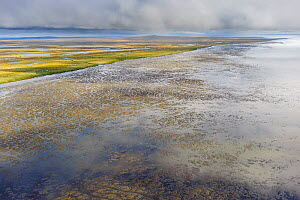 Mudflats on the Yukon Delta National Wildlife Refuge, Alaska, USA, September 2010. The delta contains the single largest expanse of intertidal habitat in North or South America and is a crucial stagin...  -  Gerrit  Vyn