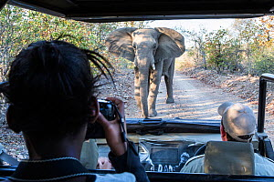 Lehlogonolo Msuma, Wild Shots Outreach student from Maseke Primary School, photographing an inquisitive African elephant (Loxodonta africana) on her first ever game drive in the Greater Kruger Nationa...  -  Wild Shots Outreach