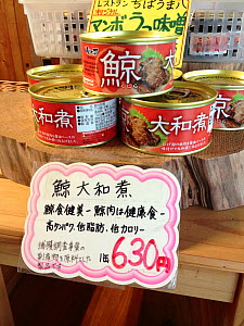 Canned whale meat for sale at a souvenir shop for tourists in Japan. The label states that the contents are from an unspecified baleen whale. The sales sign states that whale meat is a food that is go...  -  Nature Picture Library