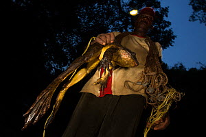 Cameroonian man hunting Goliath frog (Conraua goliath) at night, Cameroon. March 2015.  -  Cyril Ruoso