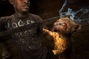 Man smoking a  small wild cat, caught for bush meat, Cameroon, February 2015.  -  Cyril Ruoso