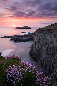 RF - Godrevy Lighthouse and flowering pink thrift (Armeria maritima), nr Hayle, Cornwall, UK. May. (This image may be licensed either as rights managed or royalty free.) - Ross Hoddinott
