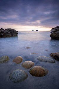 RF - Porth Nanven beach, low tide and late evening light, St Just, Cornwall, UK. June . (This image may be licensed either as rights managed or royalty free.)  -  Ross Hoddinott
