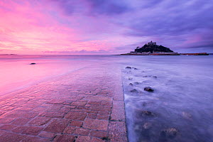 RF - St Michael's Mount and old causeway at sunrise, Marazion, Cornwall, UK. October 2015. (This image may be licensed either as rights managed or royalty free.)  -  Ross Hoddinott