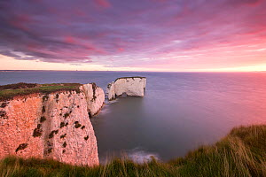 Old Harry Rocks at dawn, looking towards the Isle of Wight, Studland, Dorset, England, UK. September 2015.  -  Ross Hoddinott