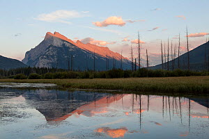 Mount Rundle at dusk, seen from Vermillion Lakes in Banff National Park, Alberta, Canada August  -  Connor Stefanison