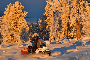 Nils-Torbjorn Nutti, owner and operator at Nutti Sami Siida, on snowmobile trip into the wilderness, Jukkasjarvi, Lapland, Laponia, Norrbotten county, Sweden Model released. - Staffan Widstrand