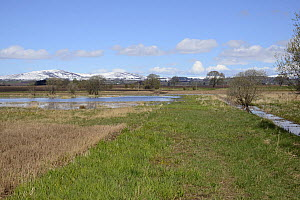 Partially flooded lowland farmland, where Eurasian beavers (Castor fiber) have become established, with snow-topped hills in the background, Haughs of Cossans, near Forfar, Angus, Tayside, Scotland, U...  -  Nick Upton