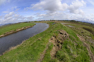 Collapsing flood defence dyke and flooded arable farmland after winter storms in an area where Eurasian beavers (Castor fiber) have become established, River Isla, near Blairgowrie, Perthshire, Taysid...  -  Nick Upton