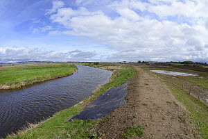 Flood defence dyke repaired after major breach during winter storms led to arable farmland becoming flooded in an area where Eurasian beavers (Castor fiber) have become established, River Isla, near B... - Nick Upton