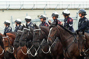 Portraits of Hamilton mounted police officers on their warmblood horses, during the National American Police Equestrian Competition (NAPEC), at Kingston Penitentiary, Kingston, Ontario, Canada. Septem...  -  Kristel  Richard