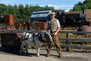 Shetland pony, in full mining harness, is led by a miner, at Beamish, the North of England Open Air Museum, near Stanley, County Durham, England, United Kingdom.  -  Kristel  Richard