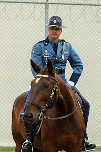 Portrait of a Massachusetts mounted police officer on his warmblood horse, during the National American Police Equestrian Competition (NAPEC), at Kingston Penitentiary, Kingston, Ontario, Canada. Sept...  -  Kristel  Richard