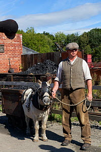 A Shetland pony, in full mining harness, is led by a miner, at Beamish, the North of England Open Air Museum, near Stanley, County Durham, England, United Kingdom. September 2016.  -  Kristel  Richard