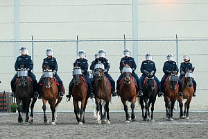 The Toronto Mounted Police force charging, during the National American Police Equestrian Competition (NAPEC), at Kingston Penitentiary, Kingston, Ontario, Canada. September 2016.  -  Kristel  Richard