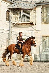 Delaware mounted police officer on his Clydesdale horse competing in dressage, during the National American Police Equestrian Competition (NAPEC), at Kingston Penitentiary, Kingston, Ontario, Canada.... - Kristel  Richard