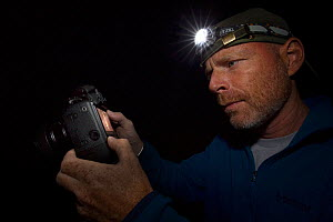 Wildlife Photographer Ingo Arndt on location, taking pictures on leopard slug (Limax maximus) during the night and checking pictures on the camera display, Swizerland  -  Ingo Arndt