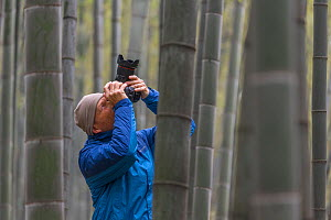 Wildlife Photographer Ingo Arndt working on location, Shunan Bamboo Sea, Shunan Zhuhai National Park, Sichuan, China April. - Ingo Arndt