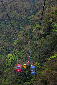 Cable Car with Tourists over Bamboo Forest, Shunan Bamboo Sea, Shunan Zhuhai National Park, Sichuan, China - Ingo Arndt
