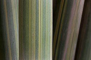 Bamboo close up of stalks, detail, China - Ingo Arndt