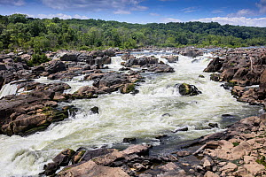 Great Falls of the Potomac, Chesapeake and Ohio Canal National Historical Park, Maryland, USA July  -  Doug Wechsler