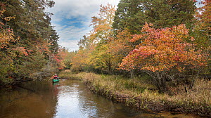 Exploring in a canoe down the Batsto River in autumn, Warrton State Forest, Pine Barrens, New Jersey, October - Doug Wechsler