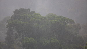 Heavy rain shower, Danum Valley, Sabah State, Borneo, Malaysia, July. - Christophe Courteau