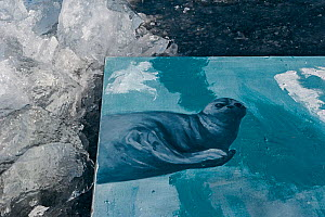 Painting of Baikal seal on Baikal ice, painted underwater, Lake Baikal, Siberia, Russia. March. - Olga Kamenskaya