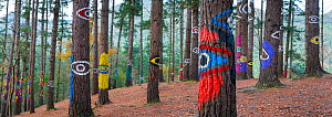 Painted forest, Oma Valley, Urdaibai, Bizkaia, Basque Country, Spain, July 2015. Photo was taken at The Painted Forest, a visual performance created by Agustin Ibarrola artist at a pine grove located... - Juan  Carlos Munoz