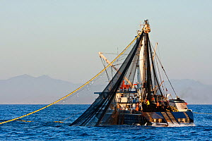 Commercial Yellow fin tuna (Thunnus albacares) fishing boat pulling in its net off the coast of Baja, Mexico  -  Brandon Cole