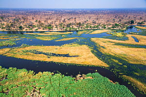Aerial view of the swamps of the Linyanti River, north Botswana near border with Namibia  -  Christophe Courteau