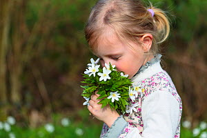 Young girl holding bunch of wild Wood anemones (Anemone nemorosa) from forest, early spring in France. Model released  -  Christophe Courteau