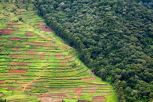 Deforestation for agriculture along border of Bwindi Impenetrable Forest NP, Uganda.  -  Christophe Courteau