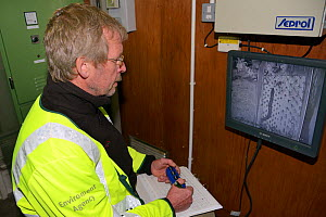 Geoff Way of the Environment Agency counting European eel (Anguilla anguilla) elvers using an eel pass beside a weir on a drainage channel on the Somerset Levels by reviewing remote infra red video fo... - Nick Upton