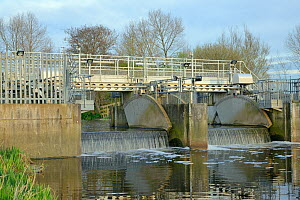 Overflow weir with adjustable gates and an Eel pass to allow migration of young European eel (Anguilla anguilla) elvers, or glass eels up a drainage channel on the Somerset Levels, UK, April 2016 - Nick Upton