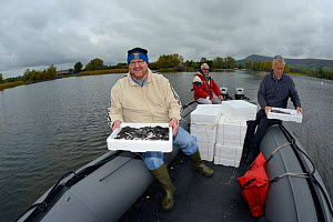 European eel (Anguilla anguilla) elvers transported in insulated boxes on an inflatable boat during a reintroduction project run by Severn and Wye Smokery and UK Glass Eels, Lake Llangorse, Breacon Be...  -  Nick Upton