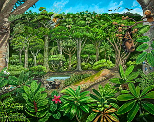 Illustration of extinct species in Mare aux Songes, 4,000 years ago, with Dodo (Raphus cucullatus) and Mauritius giant tortoise (Cylindraspis triserrata) and fruit bat,  Mauritius - Julian Hume